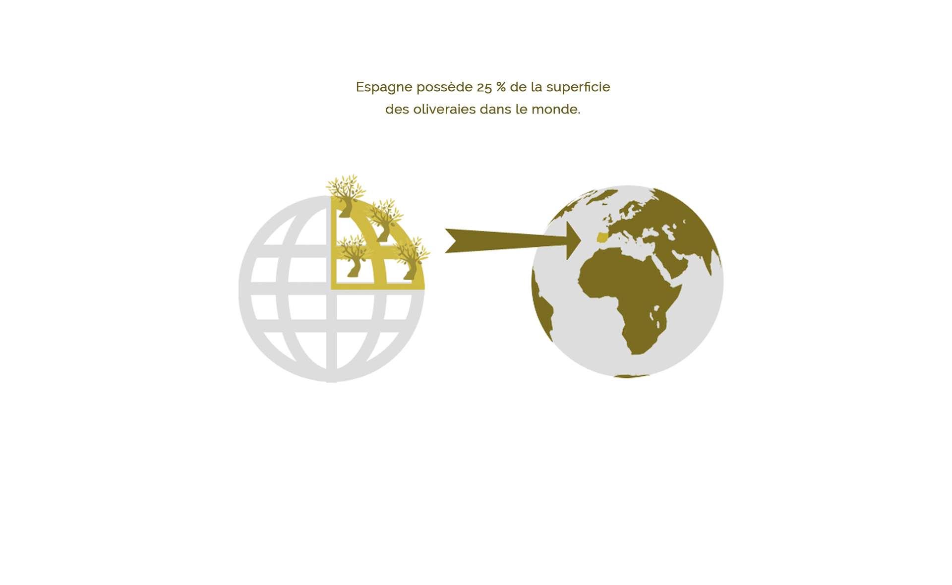 L'Espagne concentre 25% de la production mondiale d'huile d'olive