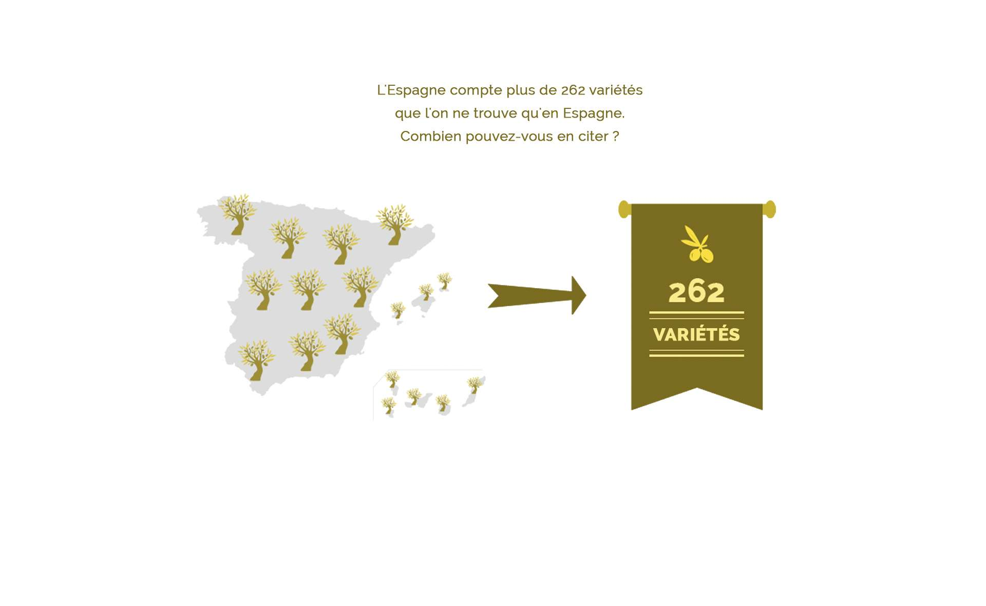 262 variétés d'huile d'olive cultivées en Espagne
