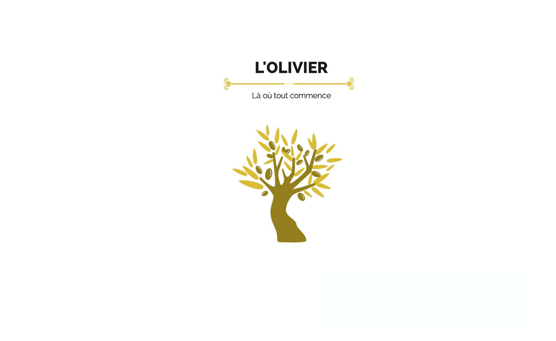 L'huile d'olive provient de l'olivier