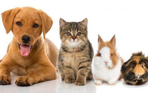 Misez sur l'Huile d'Olive pour prendre soin de votre animal de compagnie
