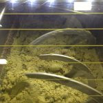Atmosphères modifiées durant le processus d'extraction de l'huile d'olive