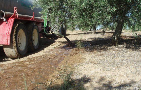 Gestion des déchets liquides des huileries par le biais de leur application aux terrains d'oliviers