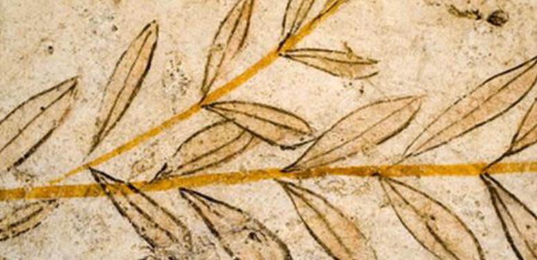 L'huile d'olive dans l'histoire de l'humanité (I)